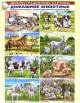 Домашние животные. Демонстрационные картины. Методический материал